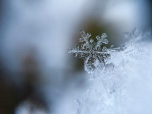 Snow flake in the winter